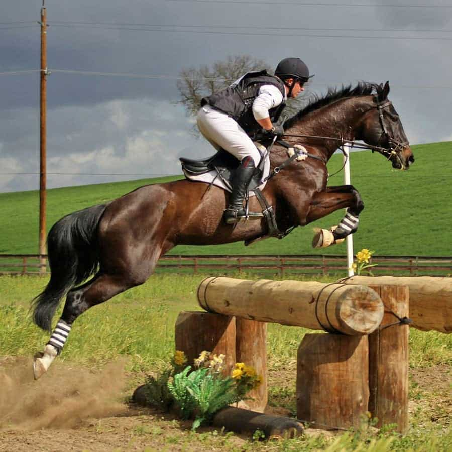 Durr Eventing 900x900